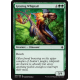 # 190 Grazing Whiptail