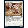# 7 Canyon Jerboa